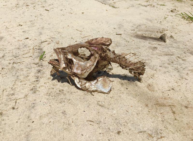 Skeleton on sand Morbid Bones Skeleton Land Beach Animal Wildlife Animals In The Wild High Angle View Animal Nature Outdoors