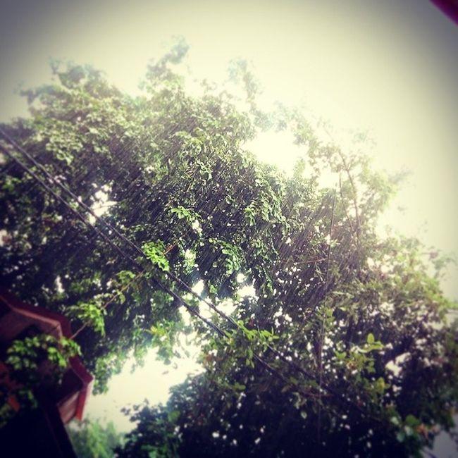 Enjoy Rainy Weather With Some  Pakoda Followme Than Followback Edited_Dark