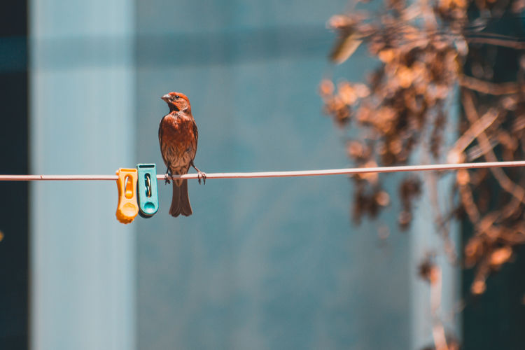 Bird perching on clothesline