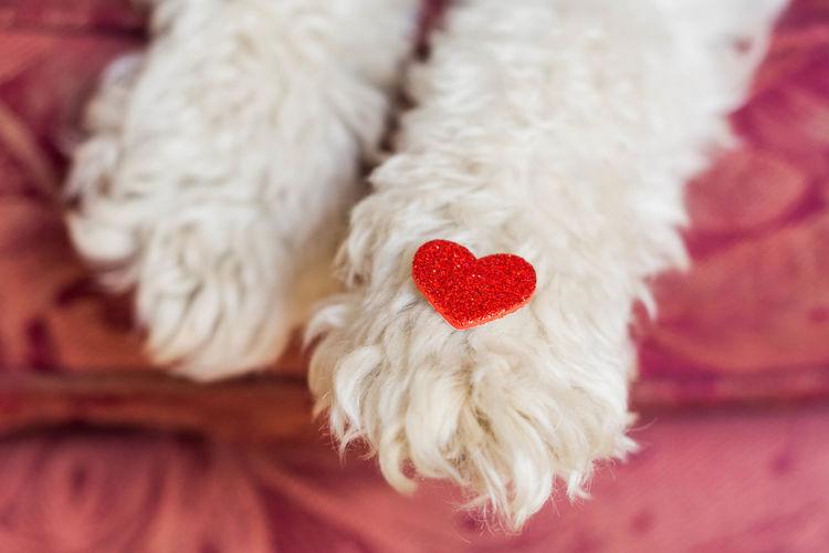 Close-Up Of Heart Shape Decoration On Dog Paw