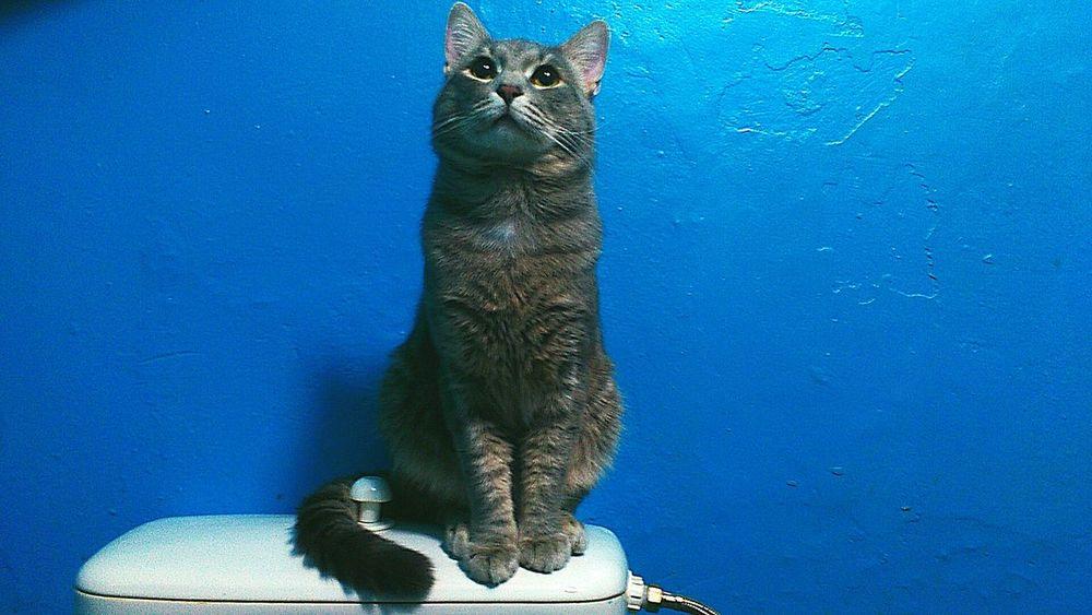Мысли о высоком One Animal Animal Themes Cat Zoology No People Animal Pet