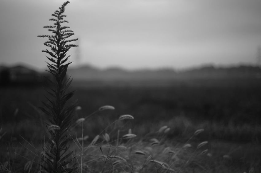 The change the world B & W Photography Black And White Photography Voightlander Nokton Classic 40mm/F1.4 SC Morning Nature X-Pro1 Fujifilm X-Pro1 Voigtlnder Plants Plant Black And White Taking Photos Relaxing Nature Photography Tired Morning