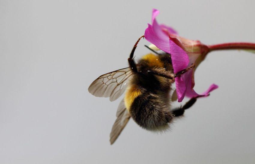 Nature Macro Bee