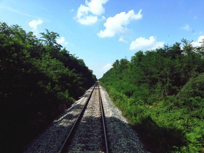 Railroad Tree
