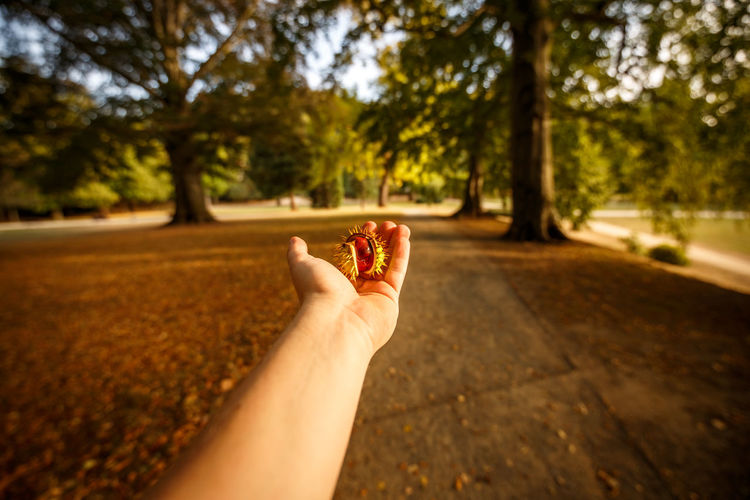 Midsection of person holding ice cream cone against trees