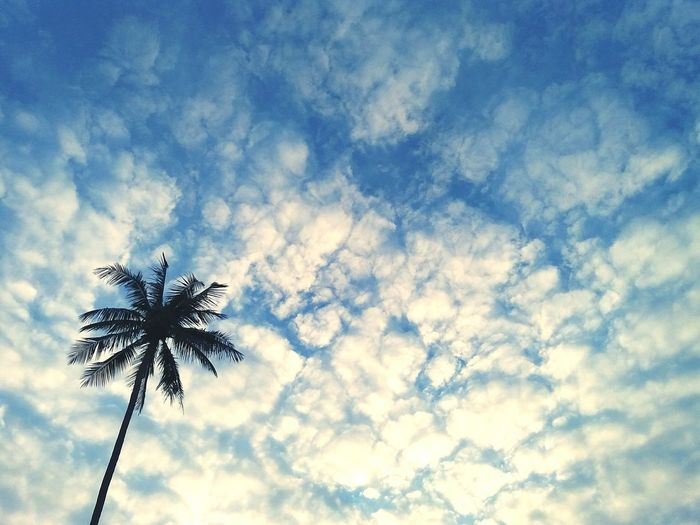 Low Angle View Palm Tree Tree Nature Cloud - Sky No People Outdoors Sky Beauty In Nature Treetop Day Palm Tree Rule Of Thirds Left Island Clouds Sky