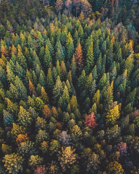 Autumn Beauty In Nature Coniferous Tree Day Evergreen Tree Foliage Forest Green Color Growth High Angle View Land Lush Foliage Nature No People Outdoors Pine Tree Pine Wood Pine Woodland Plant Scenics - Nature Tranquil Scene Tranquility Tree WoodLand EyeEmNewHere