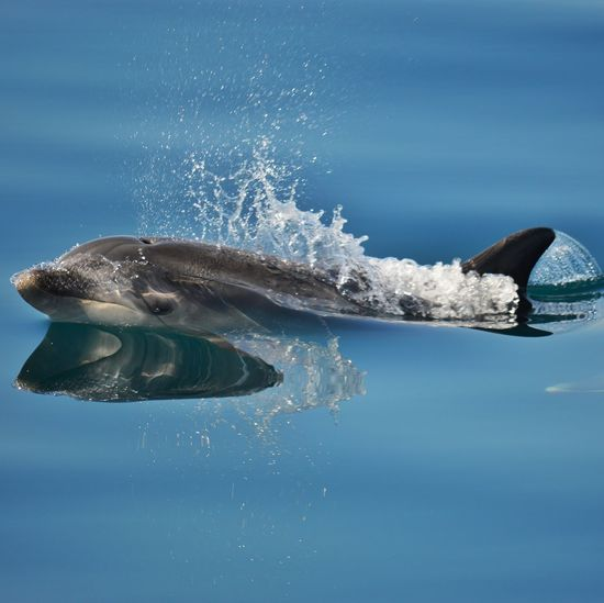 Close-Up Of Dolphin Swimming In Sea