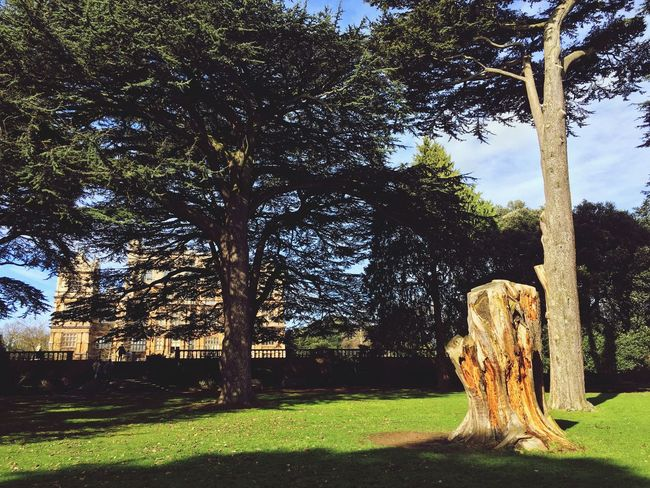 Wollaton Hall Nature Outdoors Tree Trunk