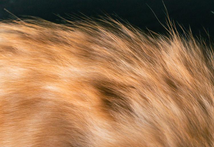 Full frame shot of an animal