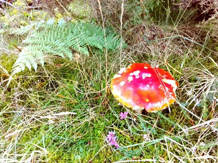 Fall Mushroom Walk On The Wood