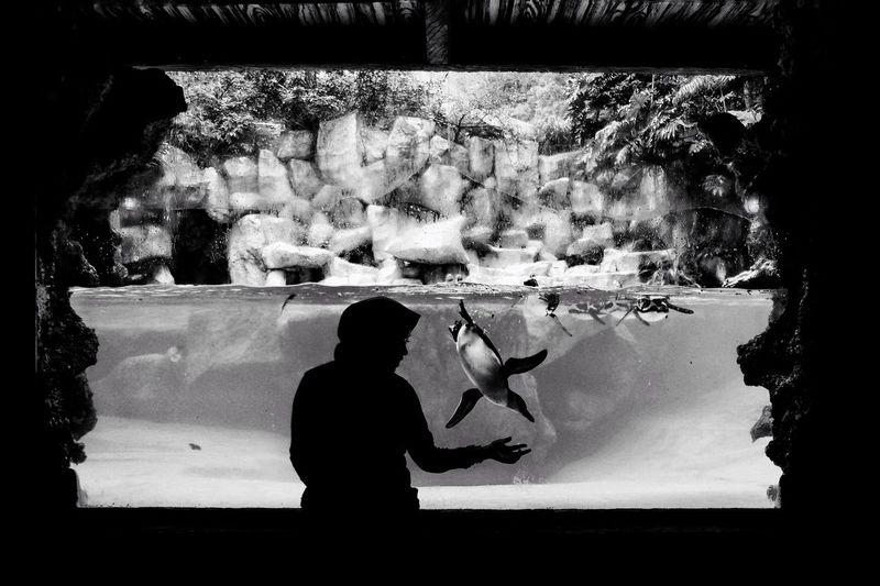 Rear view of silhouette people standing in aquarium