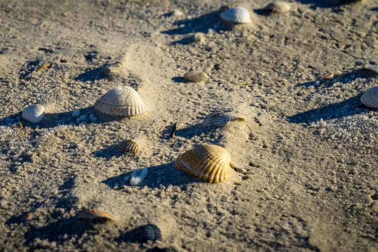 Close-up of seashells on sand at beach