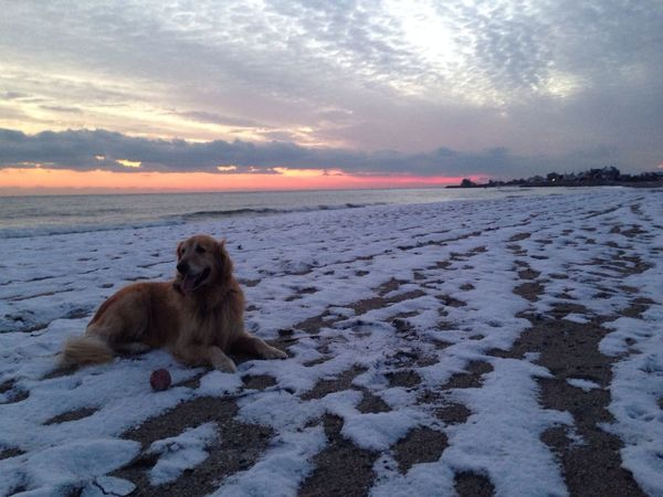Relaxing on the Beach I Love My Dog Mans Best Friend
