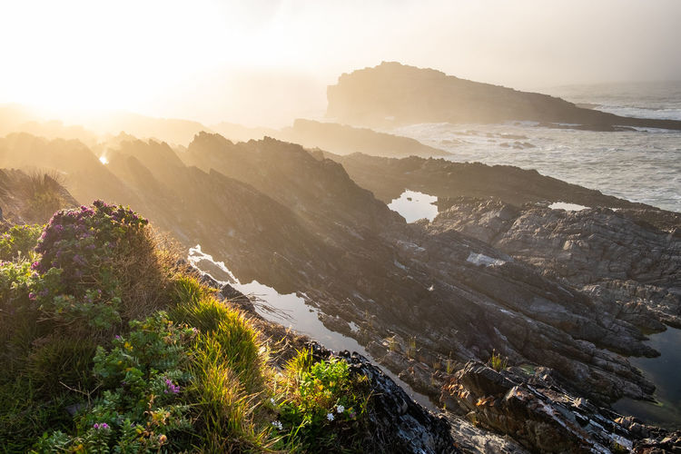 Looking at rocks at the coastline with green vegetation during sunrise