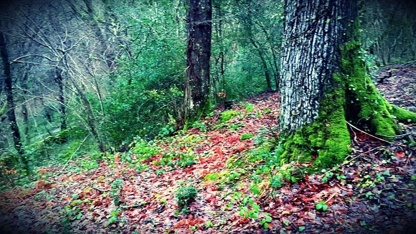 Nature Outdoors❤ Scenics Scenery Forest United Kingdom Bets-y-coed Colorful Interesting Tranquil Scene Green Brown Red Autumn Is Here...Fall Mood! Leaves And Rain Drops Trekking Beauty In Nature Photography Rainy Season Trail Beautiful Tranquility Tranquility Scene Tree Pattern In Nature