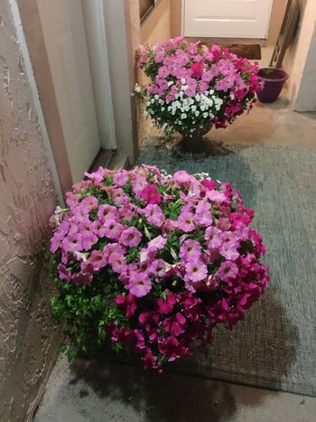 Flower Freshness Pink Color Nature Beauty In Nature Close-up Listen Within Love Mylife Home My Hobby Floral Arrangement Florida Front Door Tadaa Community Tadaa Pocket_family