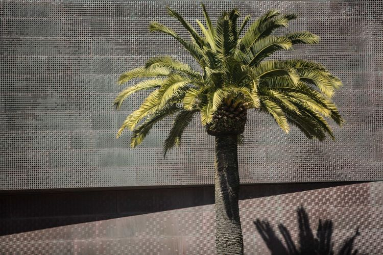 Green Palm USA Photos Art Building Califonia Green Color Growth Palm Tree Plant Shadow