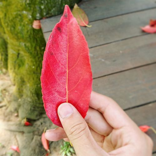 Close-Up Of Person Holding Leaf