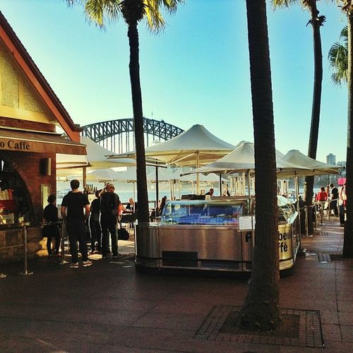 Sydney Bridge Restaurant Opéra Operahouse Vivid Igers IGDaily Instago Iphonesia Instagramhub All_shoots Landscape Landscape_shots Landscapehunter Vintage Vintagelovers