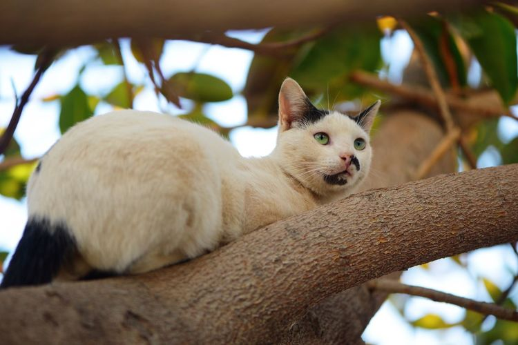 Cats Animal Animal Themes Mammal One Animal Animal Wildlife Tree Vertebrate Branch Animals In The Wild Low Angle View Plant Relaxation Close-up Pets Nature