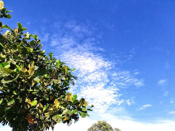 Sky Clouds Leaves Coppy Space Green Copy Space Blue Sky Background Nature Branch Branches And Sky Branches And Leaves Sunrise Bueatiful