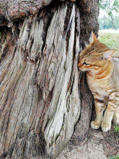 kucing & kayu