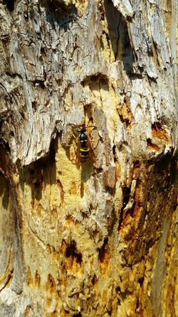 Baumstumpf 💚 Animals In The Wild Animal Themes Animal Wildlife Wespe One Animal Tree Stump Textured  Rough Backgrounds Full Frame Close-up Dead Tree Old Tree Stumps Outdoors Garden Photography Insektenspuren Insect Hotel EyeEm Nature Lover Trees And Nature Wespen EyeEm Best Shots EyeEmBestPics EyeEm Best Edits EyeEm Gallery
