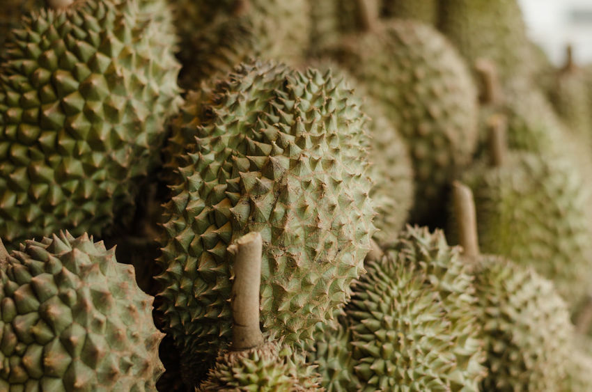 Durian Smelly Food Cactus Expensive Fruit Green Color Hard Shell Nature Sharp Smell Strong Smell Thorn