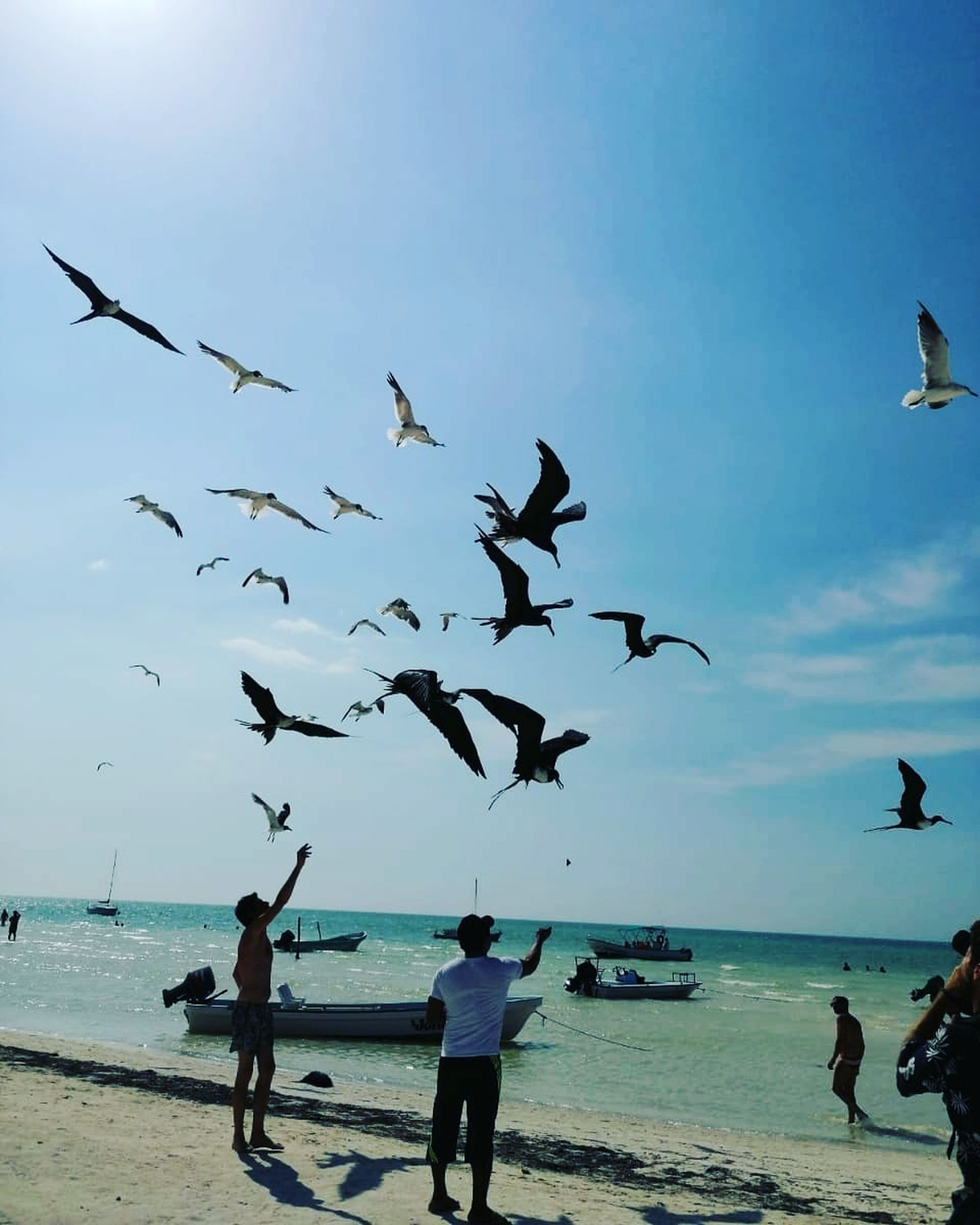 water, sky, sea, flying, group of animals, vertebrate, animal themes, animals in the wild, animal, bird, beach, animal wildlife, large group of animals, land, horizon over water, nature, horizon, group of people, real people, flock of birds, seagull
