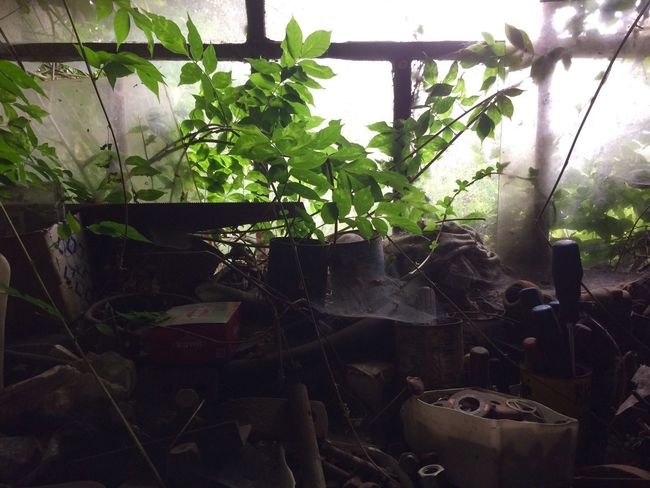 Piece of table Abandoned Plant Growth No People Leaf Day Nature Outdoors DIY Table Abandoned Places Nature Greenhouse Home Interior Green Color Indoors  Window EyeEmNewHere The Week On EyeEm Breathing Space