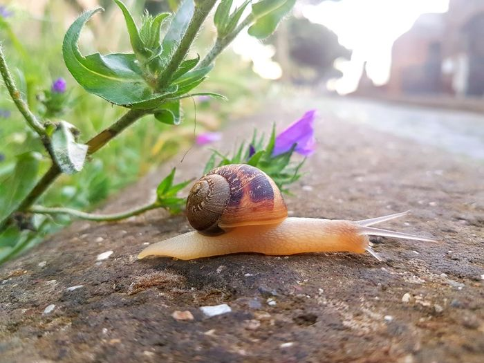 Mollusk Gastropod Animal Animal Wildlife Shell Selective Focus Animal Antenna Fragility Crawling One Animal Animal Themes Snail Animals In The Wild Animal Shell Foro Imperiale Rome Roma Italy Italia It's About The Journey