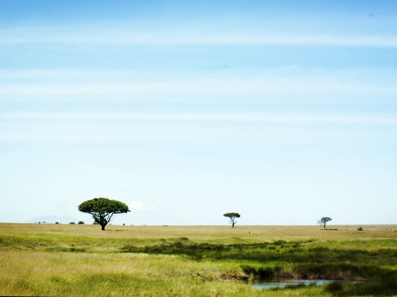 Sky No People Tranquil Scene Nature Outdoors Field Grass Day Landscape Beauty In Nature Tanzania Serengeti National Park Tree Trees Field Nature