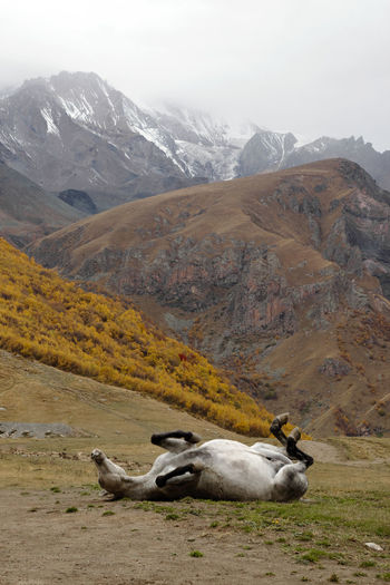 View of animal on field against mountain range