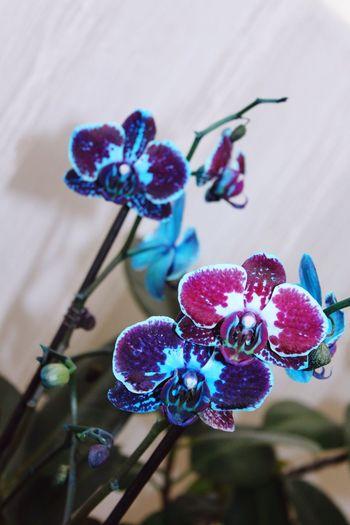 Blue Orchids Blue Orchids Enjoying Life Hello World Nature