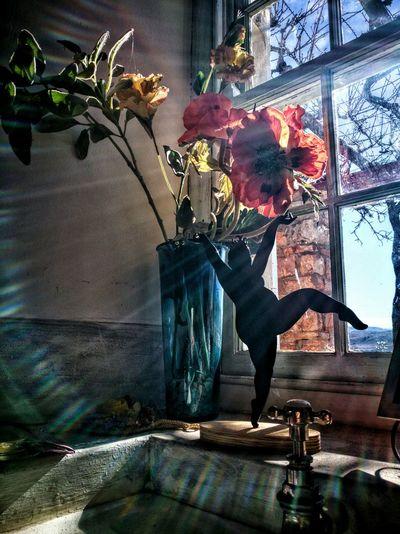 Beautiful Light Window Window Light Beautiful Light Beautiful Lighting And Decoration Flower Collection Backlit Back Lighting Colours Spectrum EyeEm Selects Cellphone Photography Cell Phone Photography