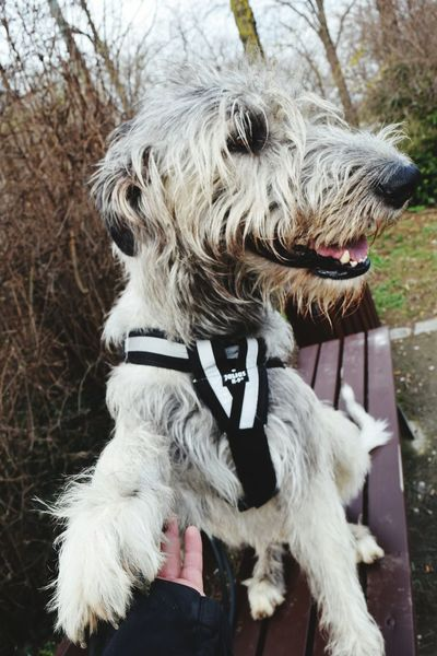 From My Point Of View Animal Themes Dog Domestic Animals Outdoors Day Winter 2017 March 2017 Cearnaigh Irish Wolfhound Dogslife Pets Dogs Of EyeEm Dog Of The Day Dogwalk Dogs Of Winter Portrait