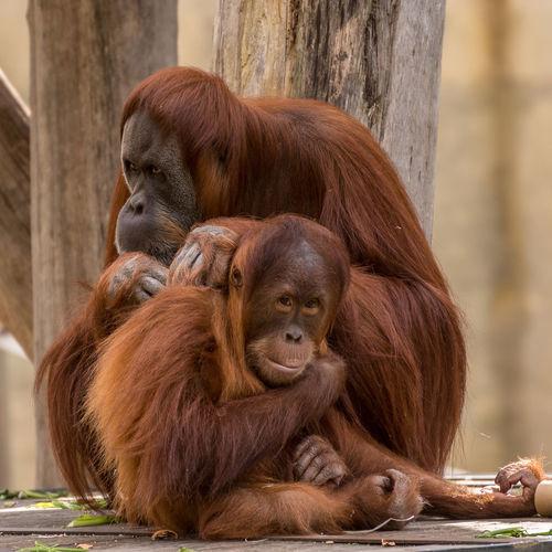 Monkey sitting in zoo