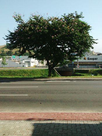 Tree Urban Nature Street Manvsnature