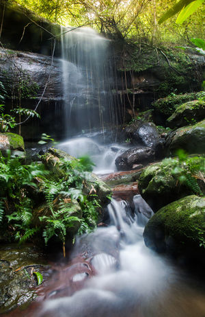 Water Waterfall Tree Motion Forest Long Exposure River Stream - Flowing Water Moss Rock - Object Rock Formation Flowing Water
