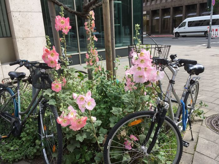 Showcase June Innenstadt Check This Out Hello World Cheese! Hi! Bycicle Fahrräder Abstellen Verboten! Fahrrad Taking Photos Enjoying Life Natur In Der Stadt Hanging Out Outdoors In Front Of Me The Great Outdoors - 2016 EyeEm Awards Street Photography EyeEm Nature Lover Blumen EyeEm Flowers