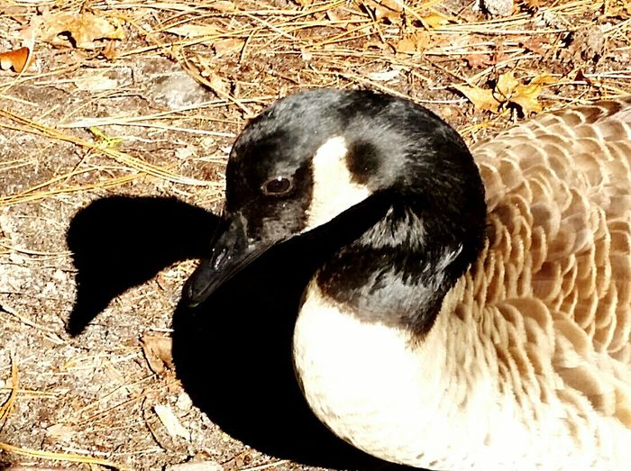 Me and my Shadow Taking Photos Hello World Goose Silly Goose Cheese! Showcase: January