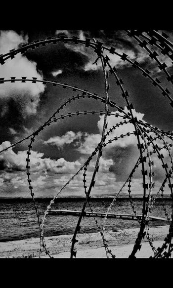 freedom Freedom Profound Bw_collection Barbed Wire