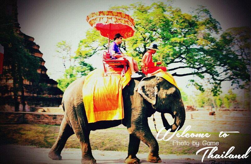 Thailand Thailand_allshots Riding An Elephant Elephant Man