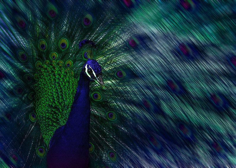 Ave Azul Bird Bleu Detail Nature Pajaro Pavo Real Pavone Plumaspavoreal
