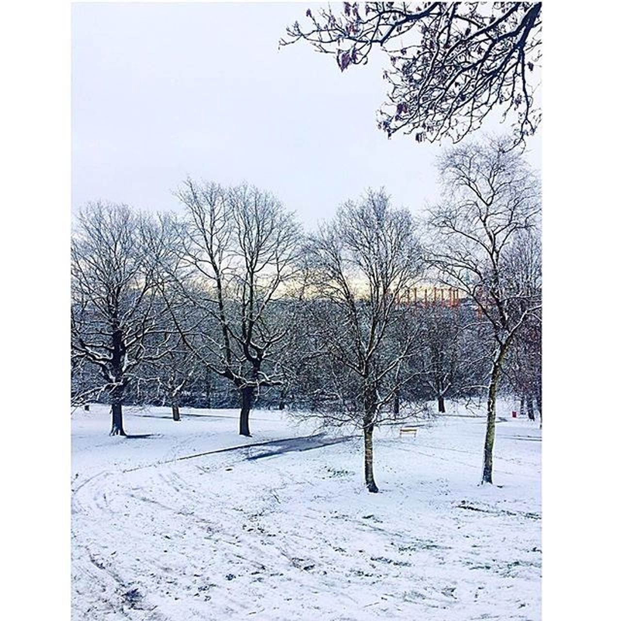 bare tree, snow, tree, winter, cold temperature, nature, branch, tranquility, beauty in nature, outdoors, day, no people, landscape, scenics, sky