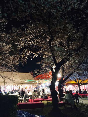 週末は天気が崩れるらしいので今しかないチャンスに群がる大人達🌸🌸🌸🍶🍶🍶🍢🍢🍢 Yozakura Nightparty BeautifulNight ❤️ Shrine Cherry Blossoms Relaxing
