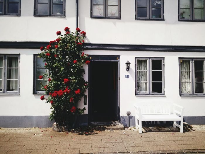 Flowering plant by building during sunny day