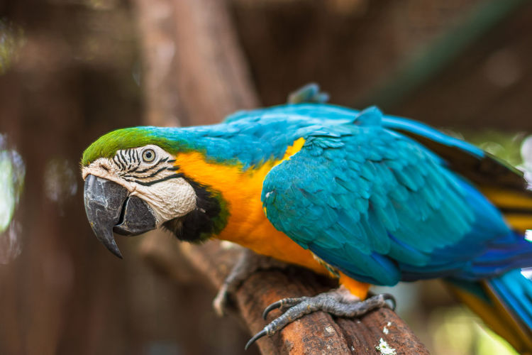 Parrot in the zoo Animal Themes Animal Wildlife Animal Parrot One Animal Animals In The Wild Bird Vertebrate Macaw Gold And Blue Macaw Blue Close-up Focus On Foreground Day No People Perching Nature Beauty In Nature Animal Body Part Tree Outdoors Beak Animal Head