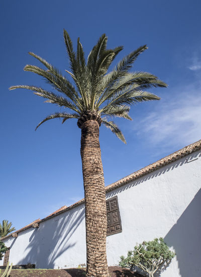 Palm tree against building and blue sky